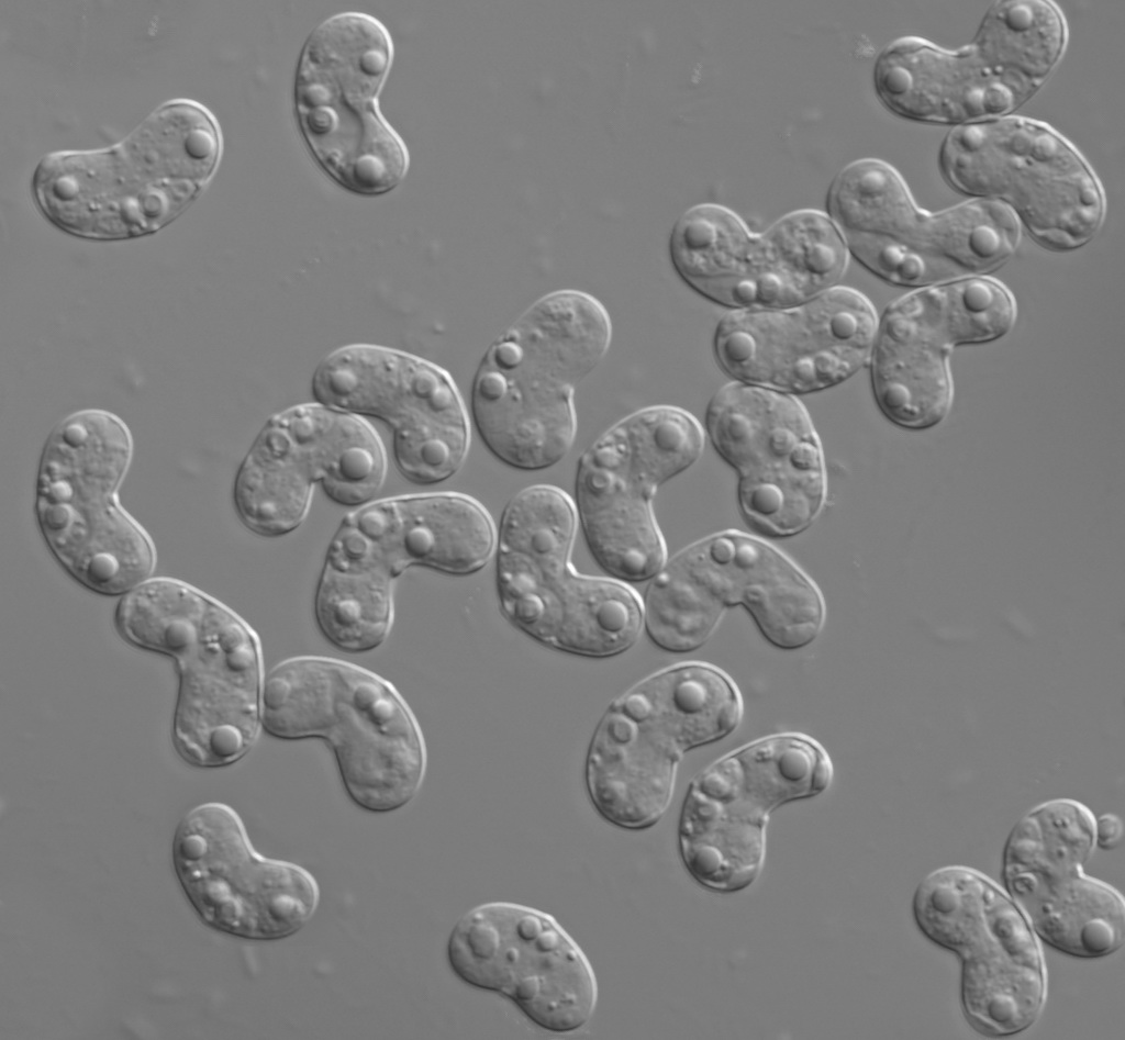 a study of the extracellular and enigmatic myxazoa National academy of sciences contact feedback an enigmatic group of small planktonic spherical and several si-induced extracellular matrix protein genes in.