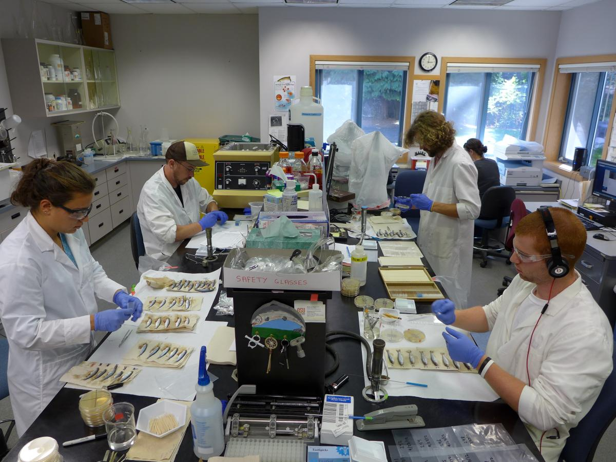 advances in fish microbiology and pathology Clinical microbiology is a full service, state of the art laboratory that provides services 24 hour/day, seven days/week to meet the needs of the university hospital and its associated clinics it is both cap (college of american pathologists) accredited and clia certified.