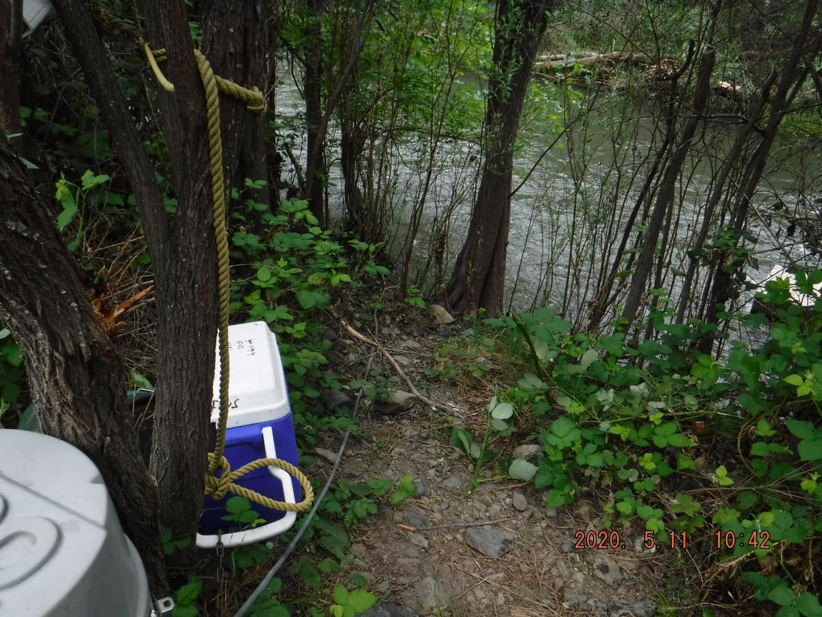 Index site at Kinsman on the Klamath River on May 11